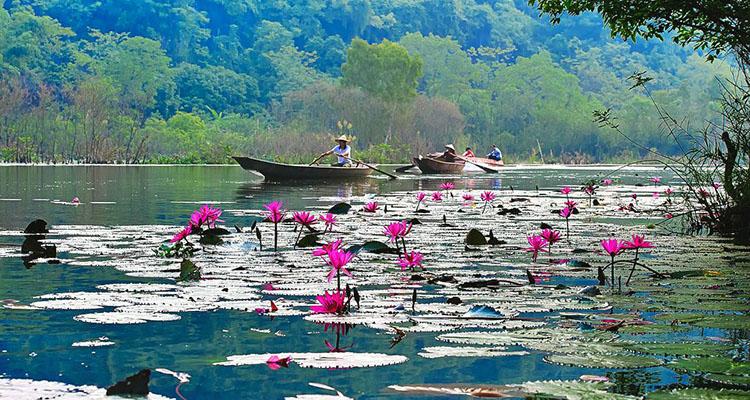 Hoa súng chùa Hương Hà Nội
