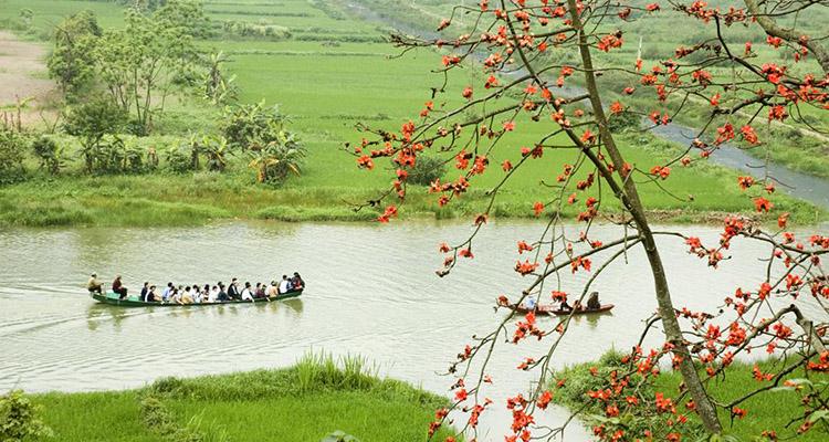 hoa gạo chùa Hương Hà Nội