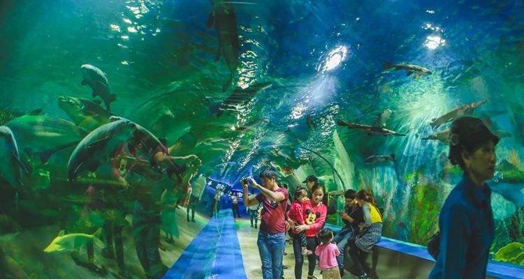 Kết quả hình ảnh cho hình ảnh trẻ em du lịch Thiên Đường Bảo Sơn