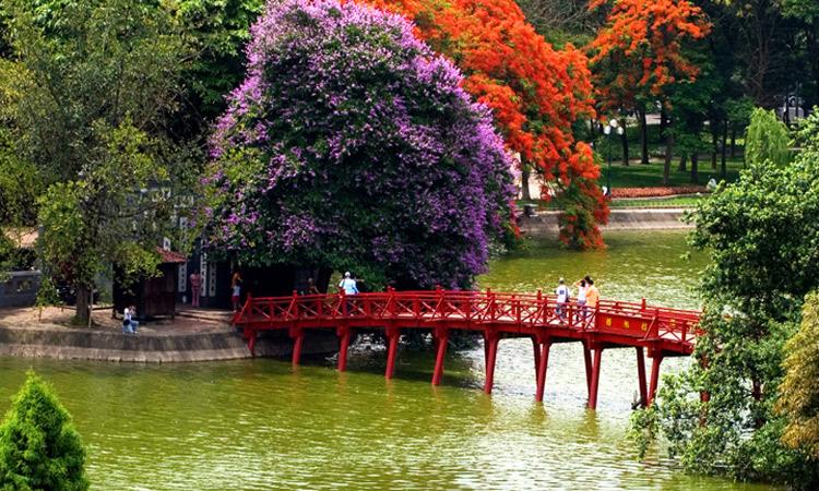 ảnh Hồ Gươm Hà Nội - hoa bằng lăng