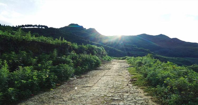 Bản Tả Phìn cách thị trấn Sapa khoảng 15km.