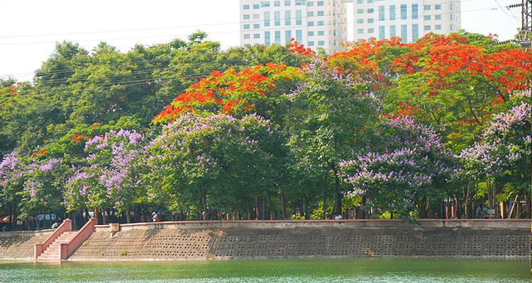 Các loài hoa ở Công viên Nghĩa Đô