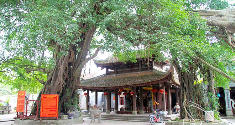 Những cây cổ thụ tồn tại lâu đời tại đền Mẫu Hưng Yên