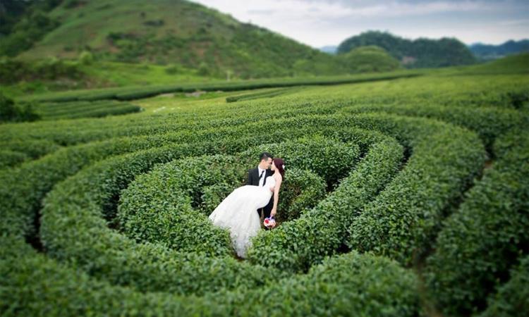 Đồi chè Mộc Châu - ảnh cưới