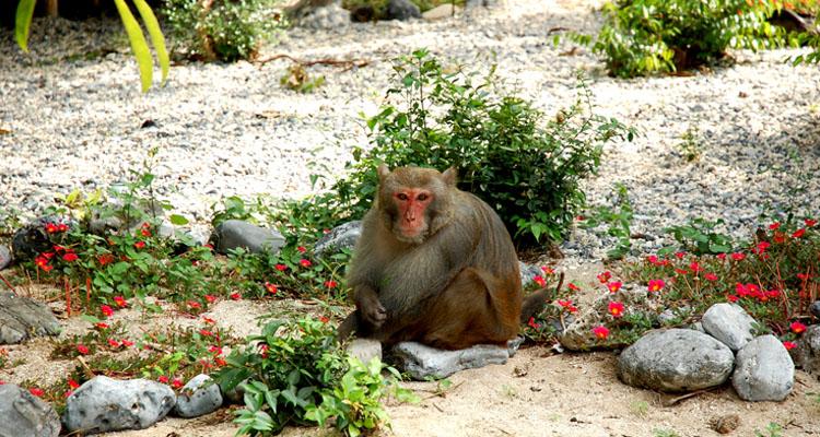 Du lịch Cát Bà đảo Khỉ