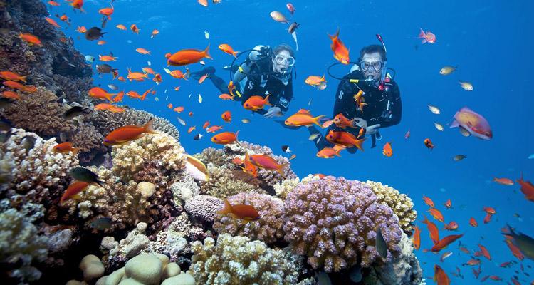 Du lịch Cát Bà ngắm san hô