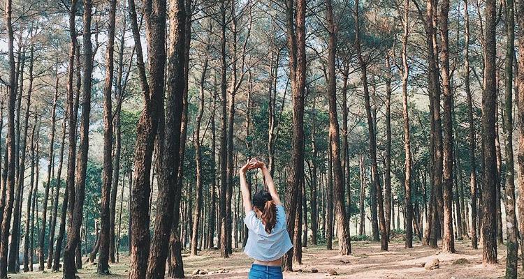 Vườn Quốc Gia Ba Vì Hà Nội rừng thông