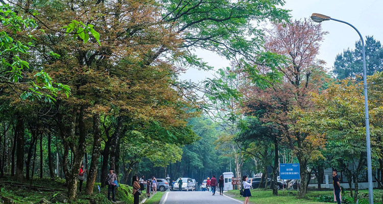 Vườn Quốc Gia Ba Vì Hà Nội vườn cây