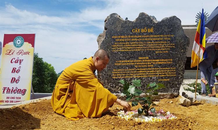 Hình ảnh chùa Tam Chúc - cây bồ đề