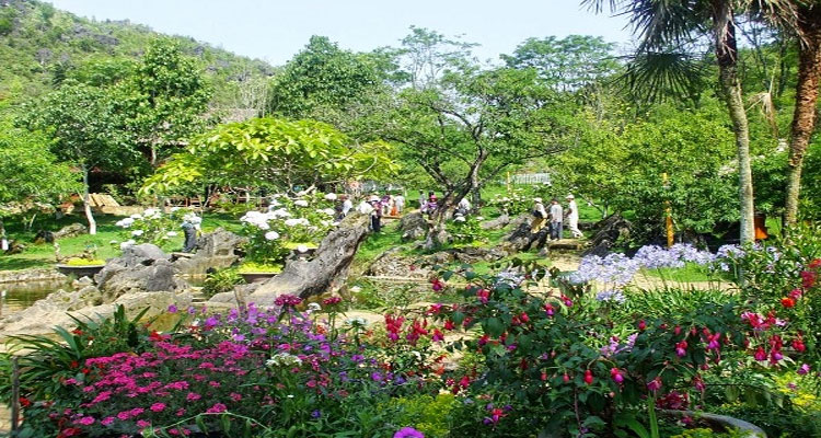 Vườn hoa đầy màu sắc ở Hàm Rồng Sapa
