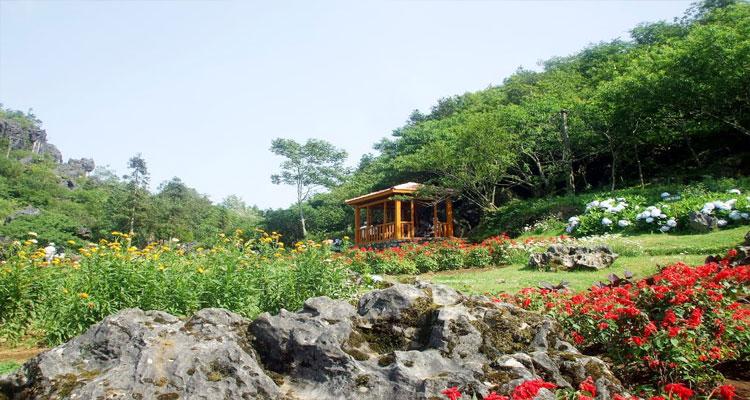 Vườn hoa đầy màu sắc ở Núi Hàm Rồng Sapa