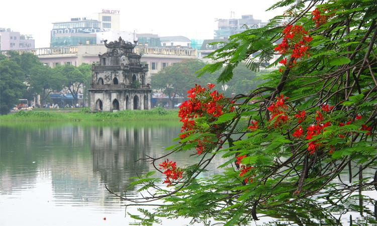 Tháp Rùa Hồ Gươm mùa hoa phượng