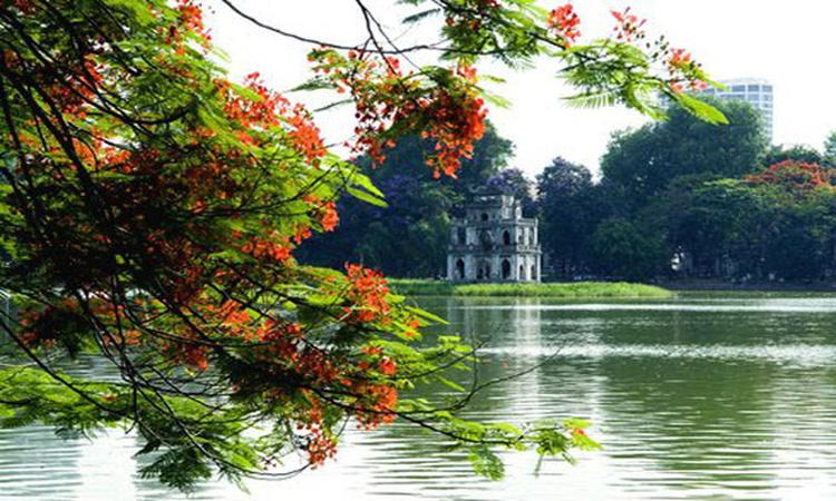 Tháp Rùa Hồ Gươm hoa phượng nở