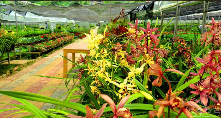 Rất nhiều cái loài hoa được trồng ở Thung lũng hoa Bắc Hà