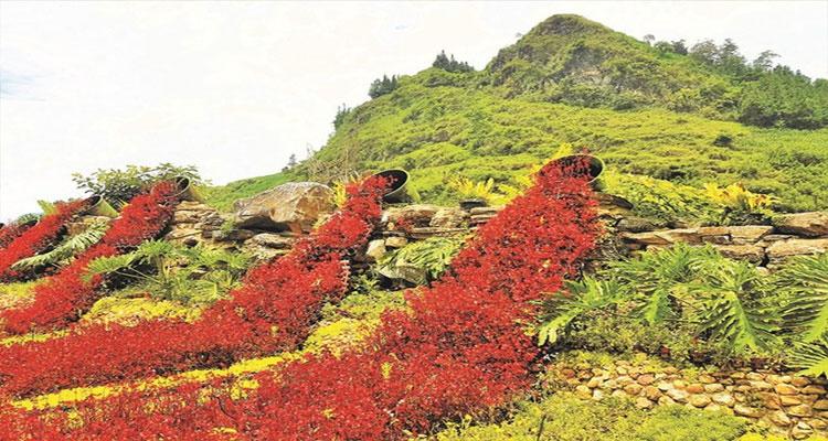 Vẻ đẹp của thung lũng hoa Bắc Hà