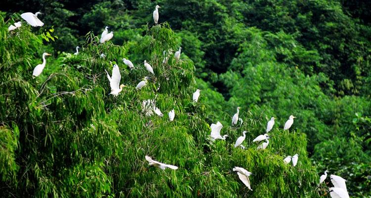 Vườn chim Thung Nham các loài chim