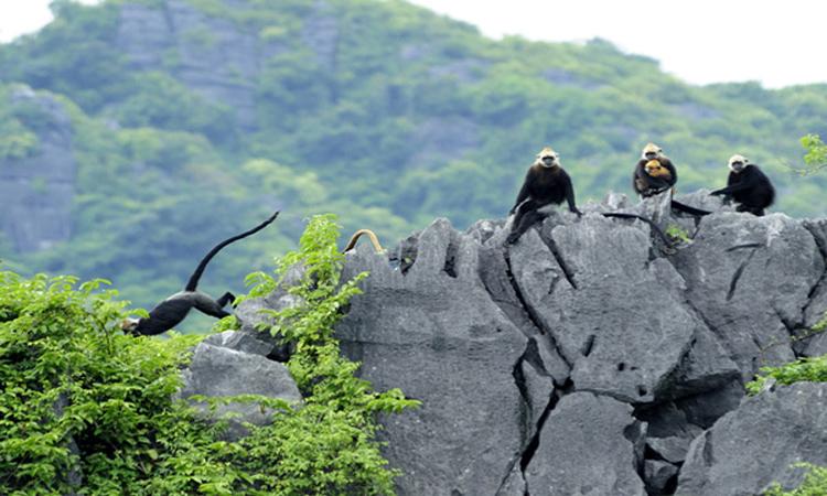 Vườn quốc gia Cát Bà - động vật quý
