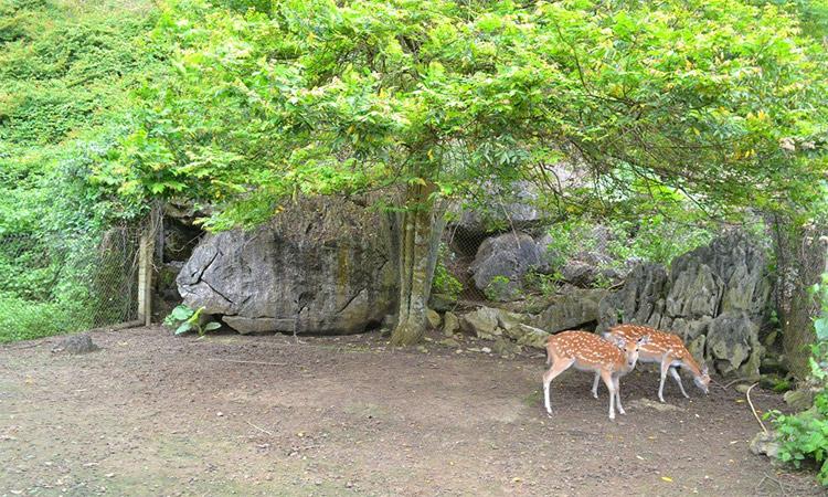 Vườn quốc gia Cát Bà - động vật quý hiếm