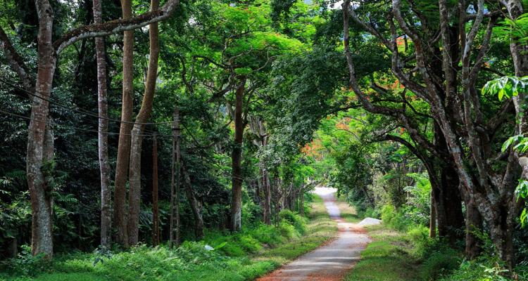 Vườn quốc gia Cúc Phương có gì 02