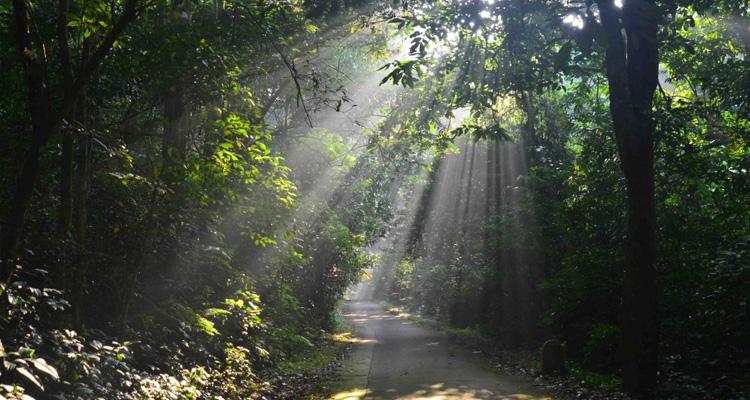 Vườn quốc gia Cúc Phương có gì 04
