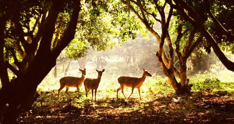 Vườn quốc gia Cúc Phương có gì 08