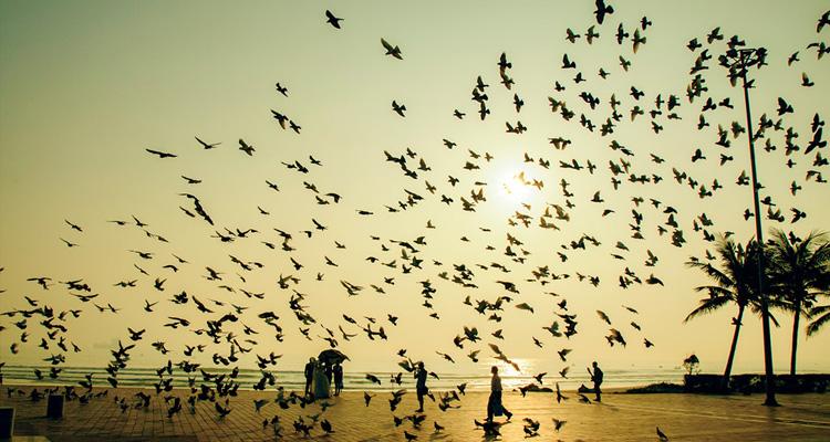 Bãi biển Mỹ Khê 07