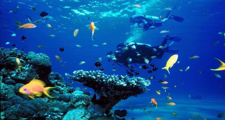 Biển Nha Trang - lặn biển