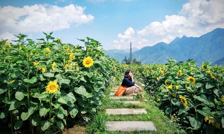 Cảnh đẹp Sapa - vườn hoa