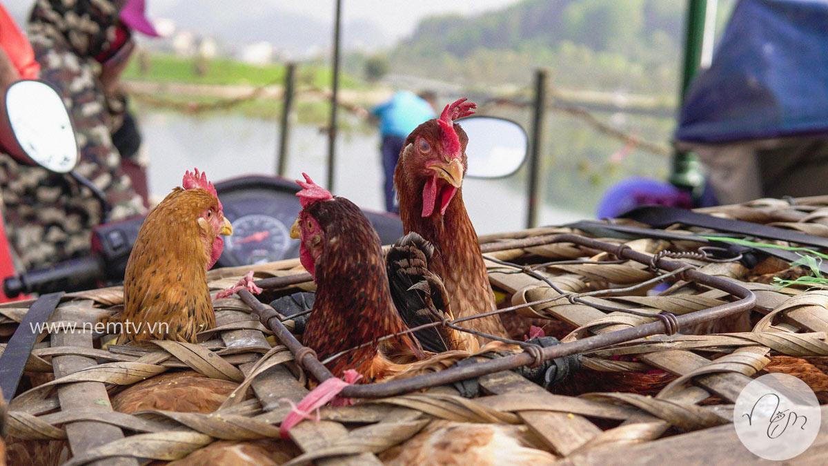 Chợ Bắc Hà Lào Cai 29