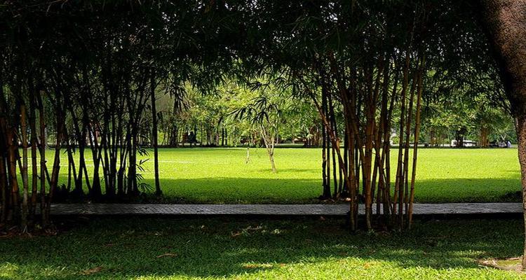 Công viên Gia Định được trồng rất nhiều cây xanh với số lượng gần 700 cây