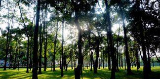 Công viên Gia Định - Địa điểm vui chơi lý tưởng vào dịp cuối tuần