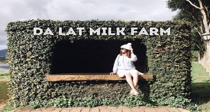 Đà Lạt milk farm - ảnh đại diện