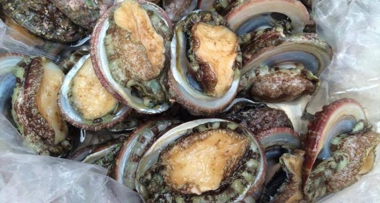 Đặc sản Phú Quốc - bào ngư