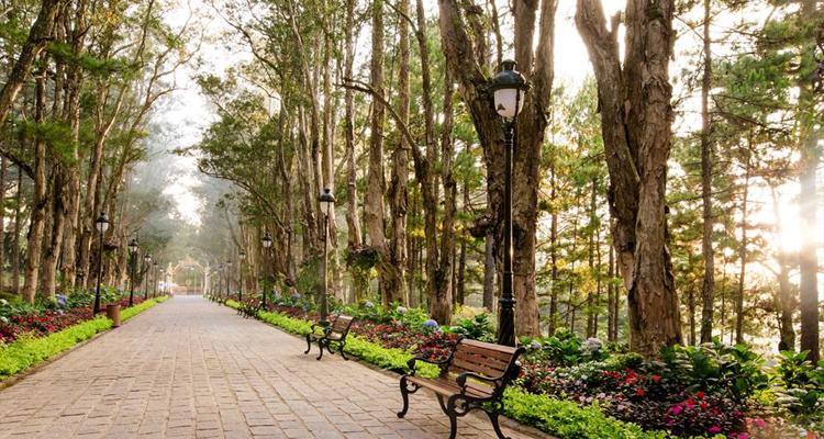 Địa điểm du lịch Đà Lạt - hàng cây