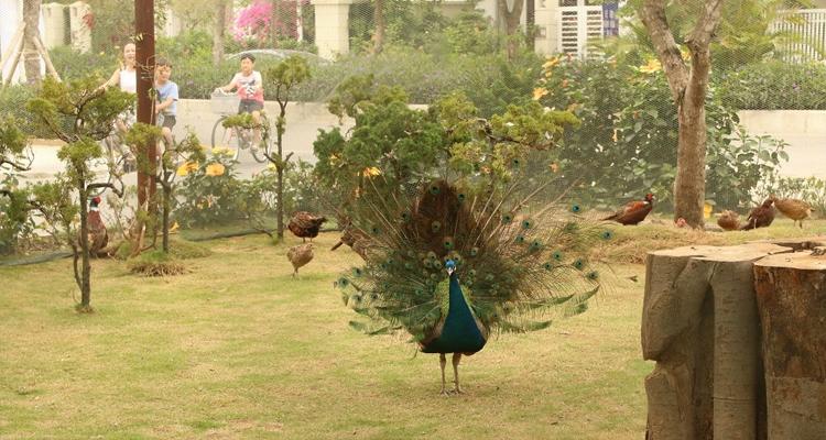 FLC Sầm Sơn - chim quý