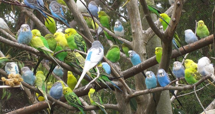 FLC Sầm Sơn - vườn chim