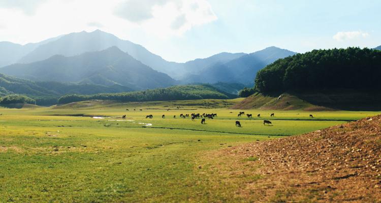 Hồ Hòa Trung 09