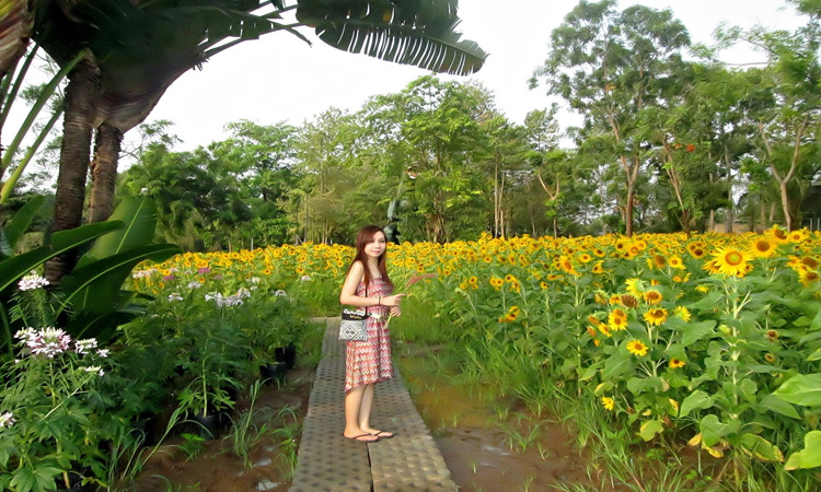 Khu du lịch Bửu Long - hoa hướng dương