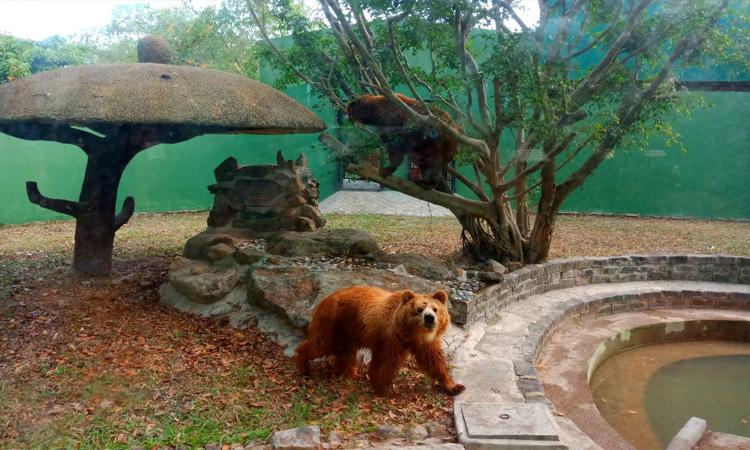 Khu du lịch Vườn Xoài - vườn thú