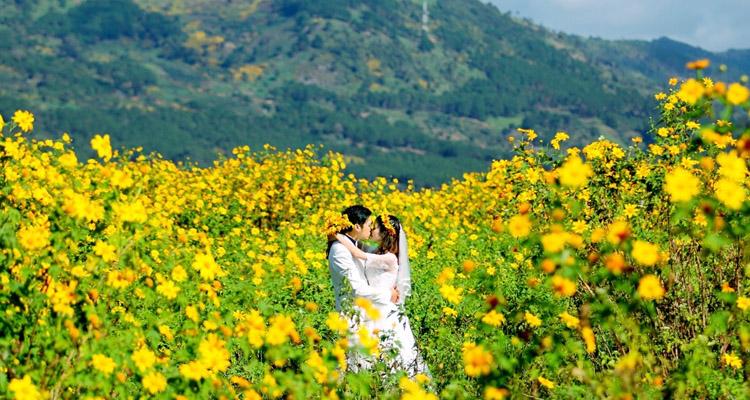 Kinh nghiệm du lịch Đà Lạt hoa dã quỳ