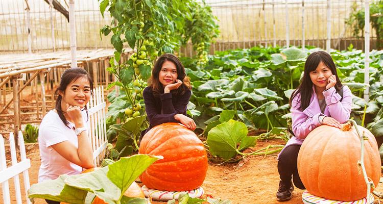 Kinh nghiệm du lịch Đà Lạt vườn bí ngô khổng lồ