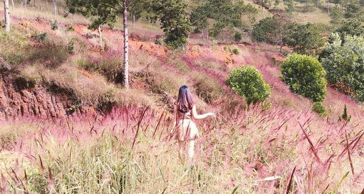 Kinh nghiệm du lịch Đà Lạt đồi cỏ hồng