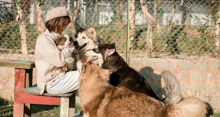 Kinh nghiệm du lịch Đà Lạt cắm trại cùng cún