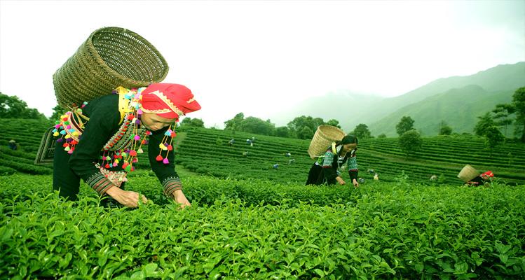 Thời điểm thích hợp đi du lịch Lai Châu