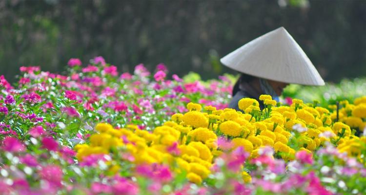 Làng hoa Vạn Thành 6