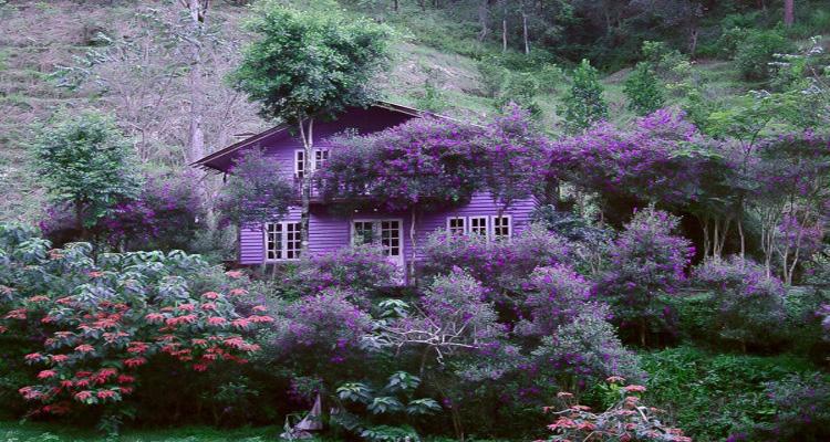 Ma Rừng Lữ Quán cảnh đẹp