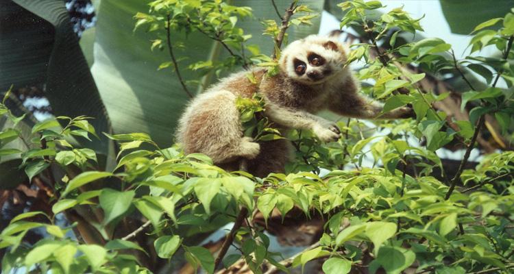 Phong Nha - Kẻ Bàng - hệ sinh thái
