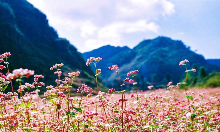 Phượt Hà Giang - mùa nào