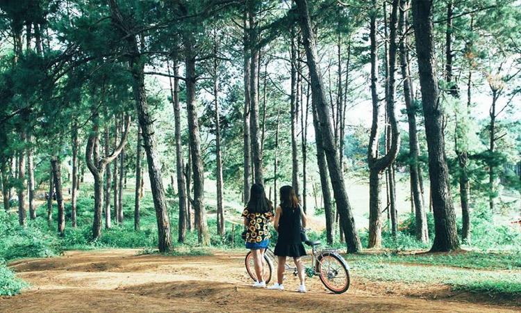 Rừng thông bản Áng - rừng thông