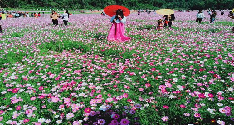Vẻ đẹp của thung lũng hoa Bắc Sơn
